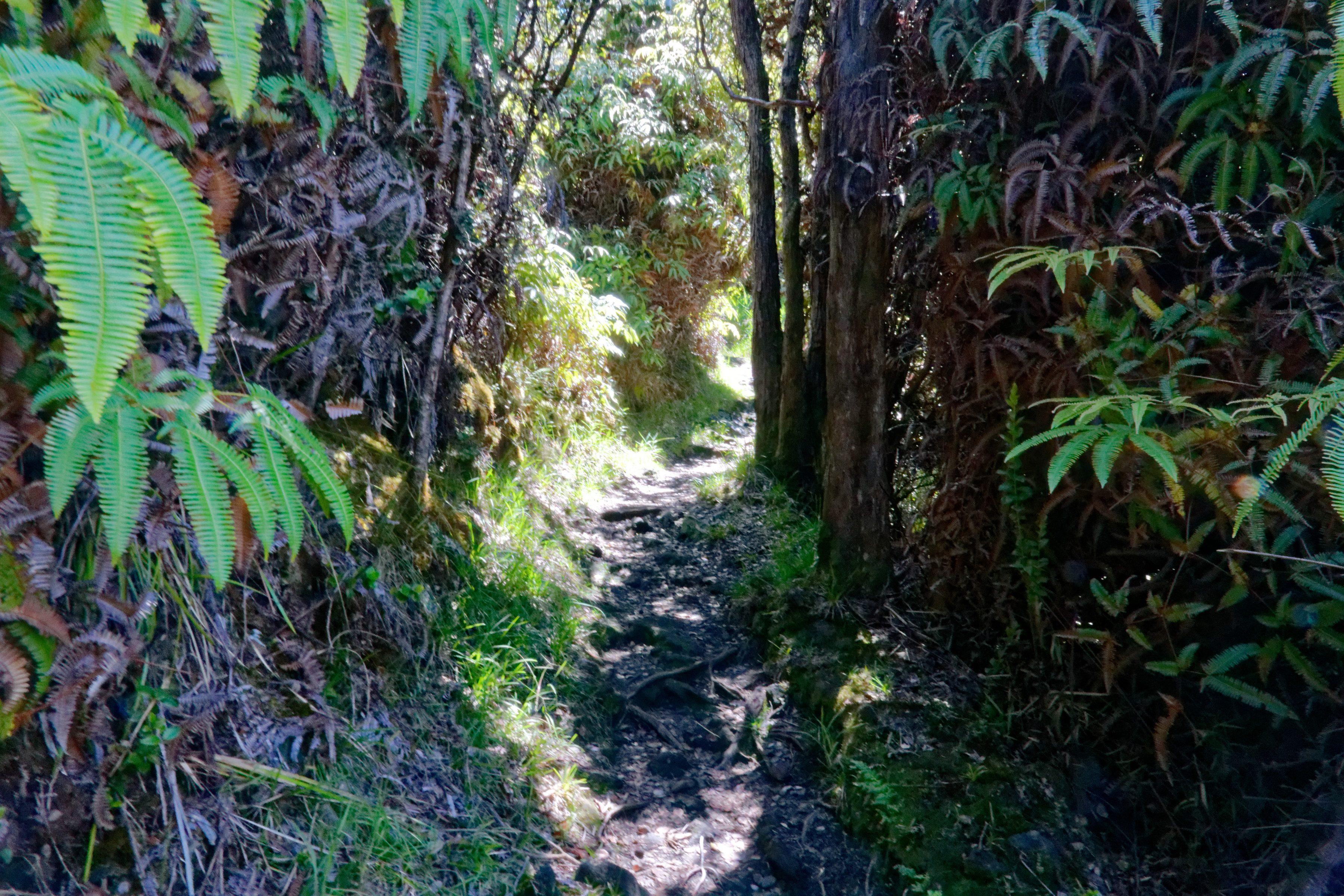 Le sentier ombragé qui mène au Pu'U HuluHulu