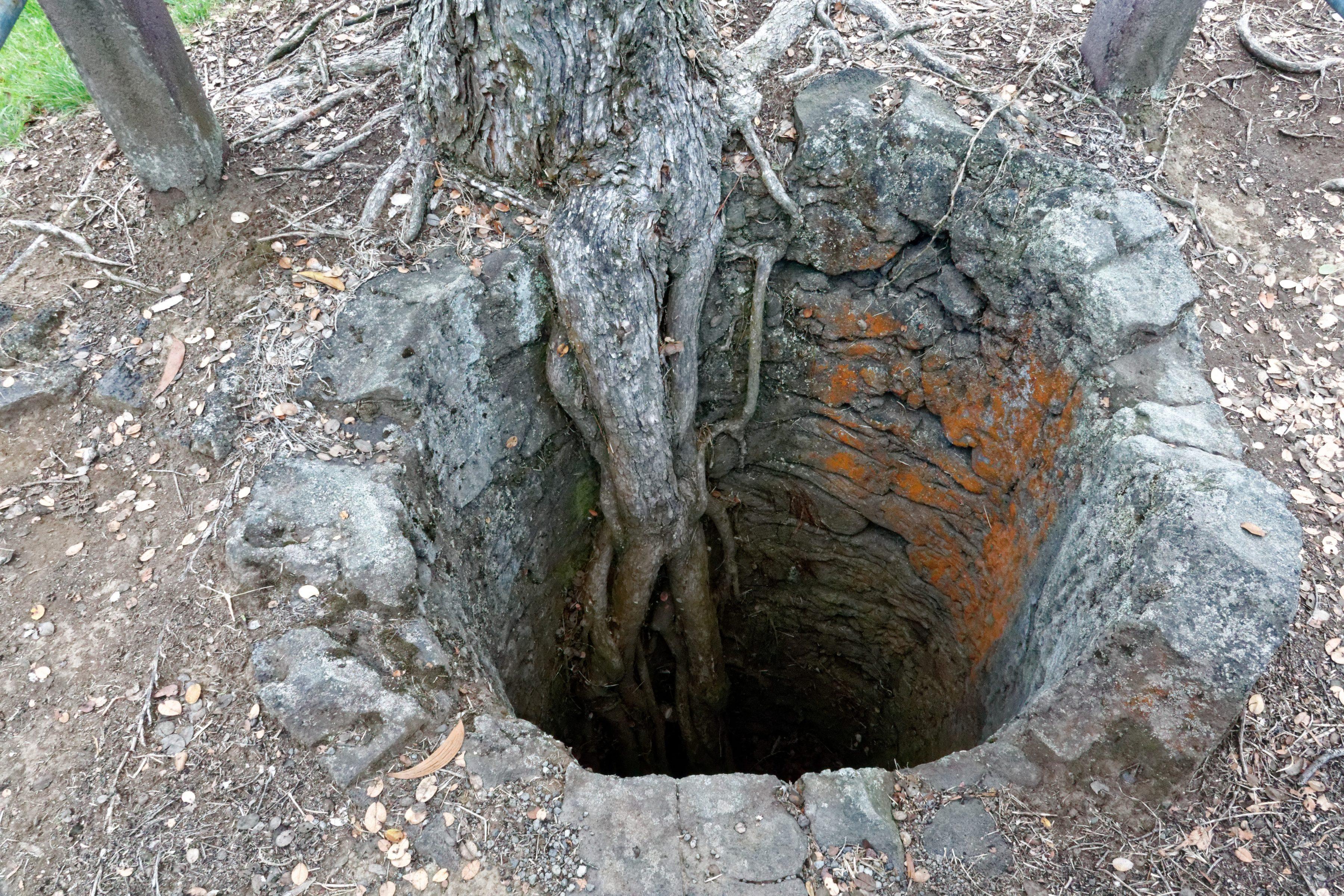 Un tree mold, vestige d'un arbre calciné
