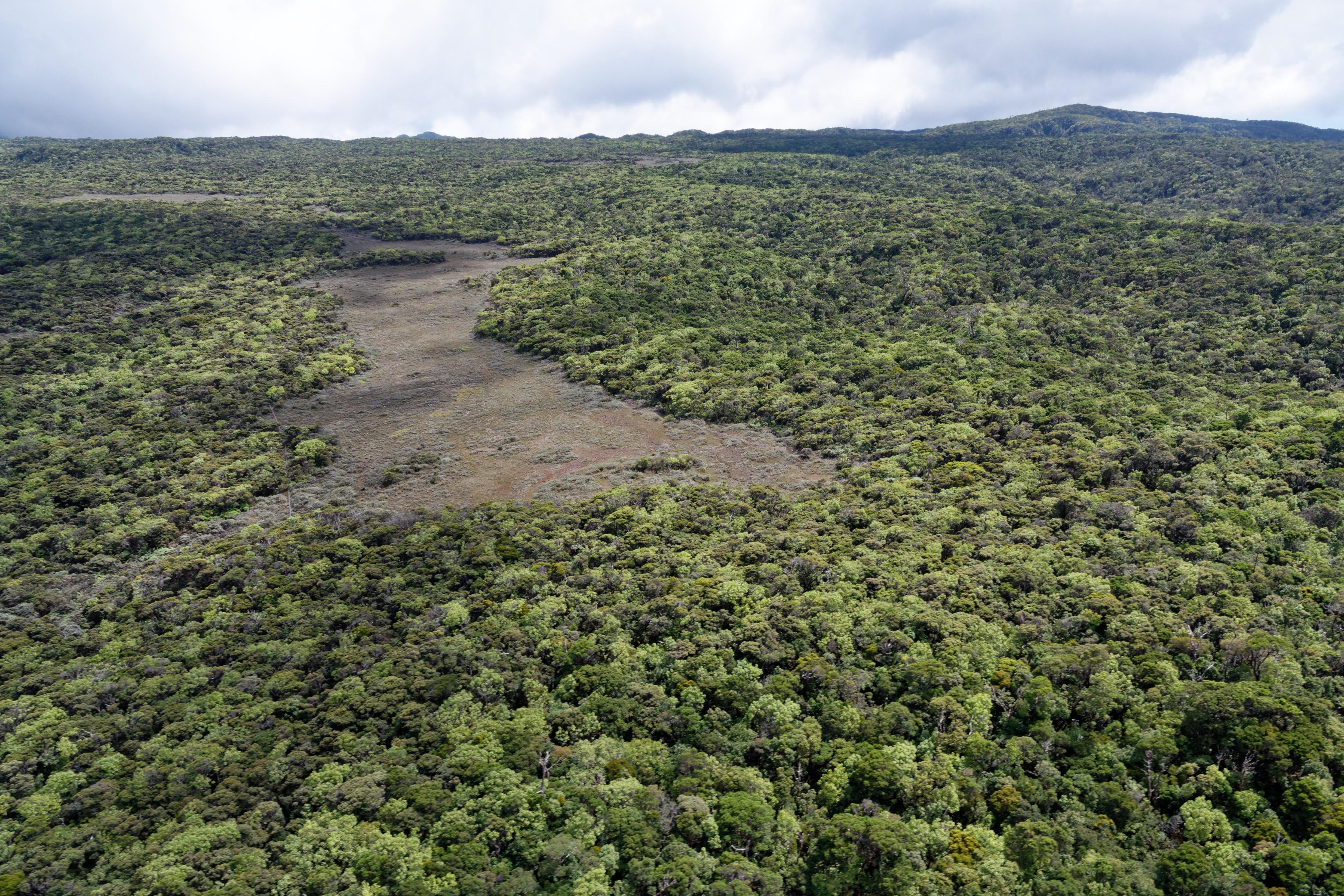 Alakai swamp, le marécage sur les hauteurs de Kauai