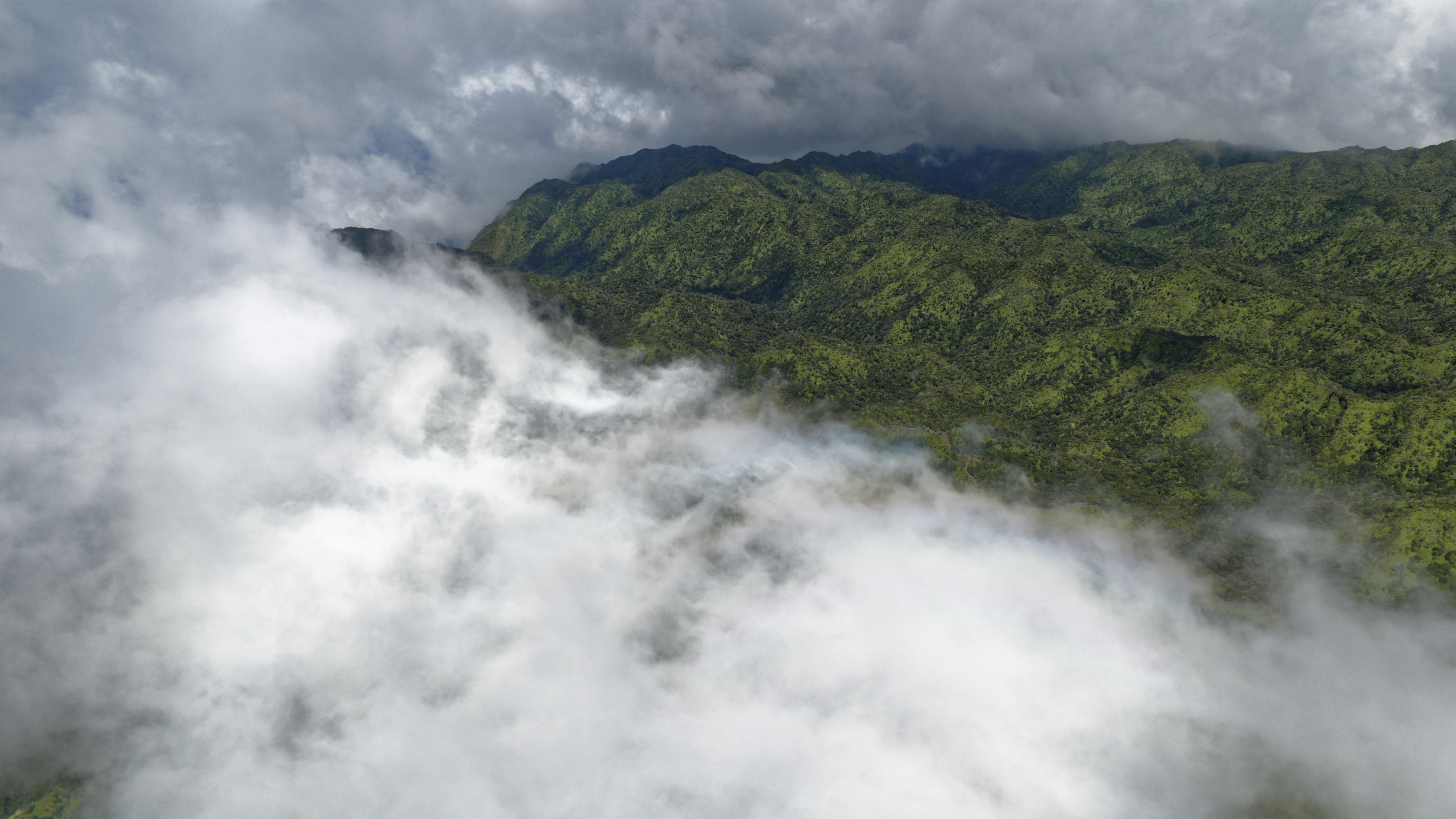 Les forêts des cîmes de Kauai, dans les nuages