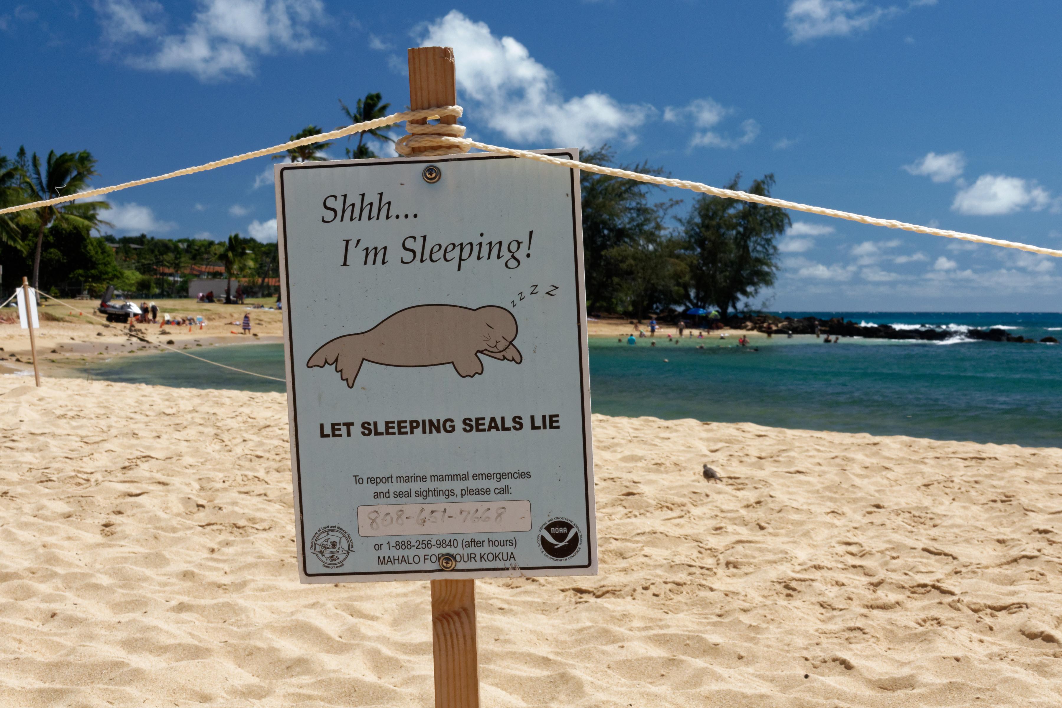 Un panneau invitant à respecter le sommeil des phoques